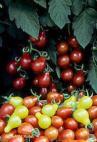 HS09-146x  Tomato - yellow and red pear varieties.
