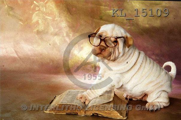 Interlitho, Alberto, ANIMALS, dogs, photos, shar pei, glasses, books(KL15109,#A#) Hunde, perros
