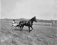 Trotting at Duindigt.<br />  French stallion Icare IV with jockey Henri Levesque, winners of the Grand Prix of the Low Countries,  June 29, 1958<br /> in Duindigt, Wassenaar, South Holland<br /> <br /> Photographer Behrens, Herbert / Anefo