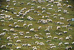 A migrating Caribou herd feeds as it travels through the Brooks Range, Alaska (composite)