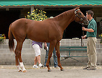 11 September 2010.  Hip #74  A.P. Indy - Miss Kate colt, consigned by Lane's End.