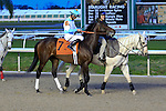 January 16, 2016: Mo Tom with Cory J Lanerie up in the Lecomte Stakes in New Orleans Louisiana. Steve Dalmado/ESW/CSM