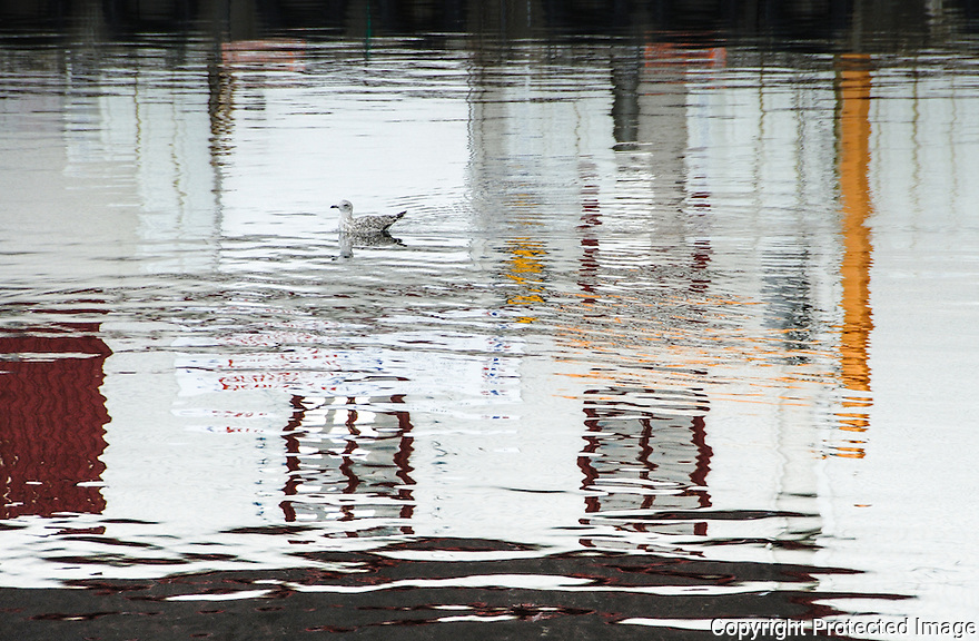 A seagull swimming in reflection on the water surface