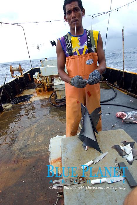Fisherman strings shark fins for drying, Offshore commercial longline shark fishing, Brazil, Atlantic Ocean