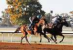 October 18, 2015:  Green Mask (outside) and Sunset Glow (inside) work for trainer Wesley Ward in preparation for the Breeder's Cup.  Candice Chavez/ESW/CSM