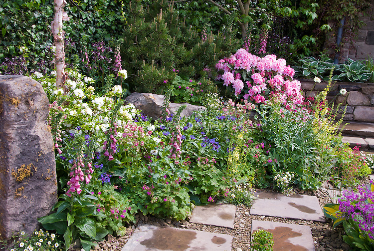 Spring garden with rhododendron, Digitalis in bloom, Betula, Pinus, stone wall