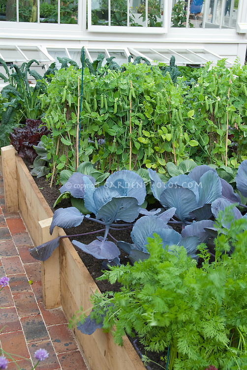 Beans on poles, cabbages, carrots, kale, raised beds, greenhouse at rear, backyard, patio, brick pathway
