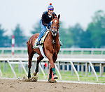 Animal Kingdom, winner of the 137th Kentucky Derby, continues to train for the Preakness at the Fair Hill Training Center on May 19, 2011 in Fair Hill, Maryland.