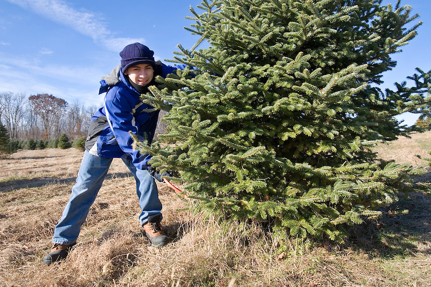 Teenager cutting down a Christmas Tree.