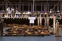 San Francisco, California - Tourists Watching Sea Lions, Pier 39, Fisherman's Wharf.