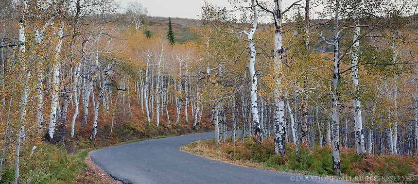Taken on the Alpine Loop on Route 92 outside of Sundance, Utah.  These aspens at the highest elevations are still colorful in mid October.