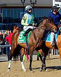 OZONE PARK, NY - JANUARY 30: Vorticity #5 with Jose Ortiz in post parade on Withers Stakes Day at Aqueduct Race Track in Ozone Park, New York on January 30, 2016. (Photo by Sue Kawczynski)