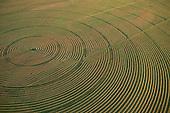 Harvest patterns on circular field