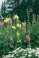 HS59-003c  Flower Garden