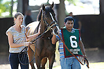 July 5, 2014: Delaware Oaks contender Image of Anna, owned by the Elkstone Group and trained by Richard Violette, walks in the paddock before the race. Fortune Pearl, trained by Graham Motion and ridden by Trevor McCarthy, wins the Grade II Delaware Oalks at Delaware Park in Stanton Delaware. She is owned by Lawrence Stable Inc. © Joan Fairman Kanes/ESW/CSM