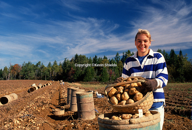 Young woman working at the potato harvest, Houlton, Maine, USA