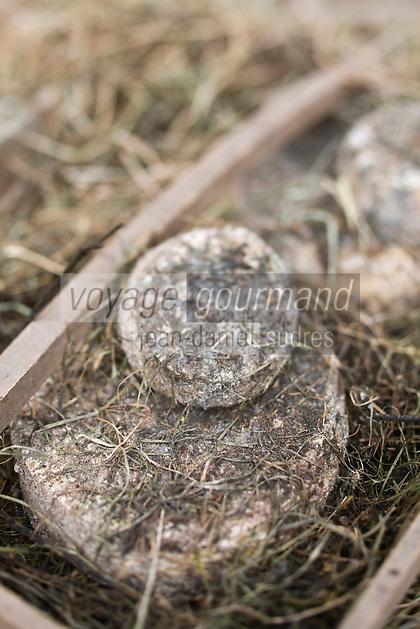 Europe/France/Picardie/80/Somme/Baie de Somme/ Huppy: La Tomme picarde ou tomme au foin de Sandrine et Sege Sellier à la ferme du Petit Belloy