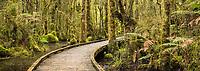 Boardwalk through boggy rainforest at Ship Creek near Haast, UNESCO World Heritage Area, South Westland, New Zealand, NZ