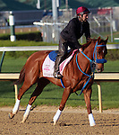 April 19, 2014 Sugar Shock gallops at Churchill Downs