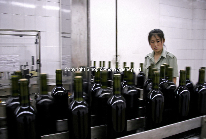 A worker on the bottling line of Grace Vineyard in Taigu County, Shanxi Province, China. Established in an area that have been growing grapes since the Tang Dynasty (618-906 A.D.) with Hong Kong and French investment, the winery seeks to set itself apart from mass-produced mainstream Chinese wines with French expertise and smaller scaled production. With increased income and western influence, the number of Chinese wine drinkers has increased at an annual rate of 10% in the past ten years, 10 times of that of the world average of 1%..07 Jul 2005