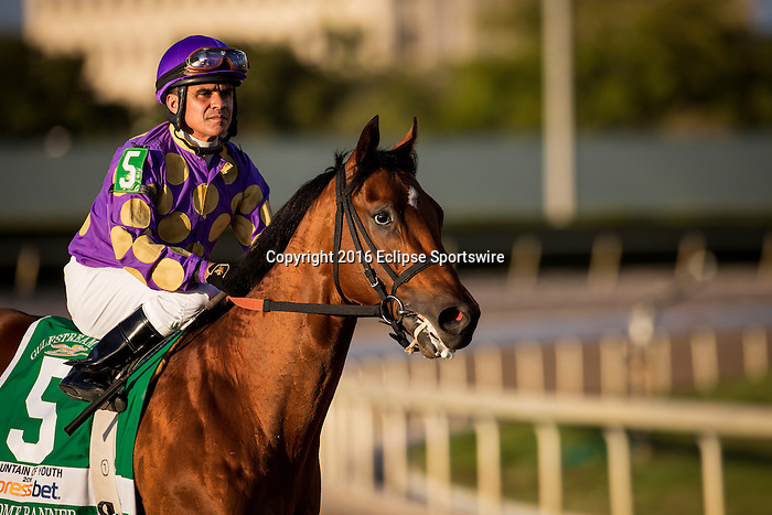 HALLANDALE FL - FEBRUARY 27: Awesome Banner #5, ridden by Jose C. Caraballo heads to the gate for the Xpressbet.com Fountain of Youth Stakes at Gulfstream Park on February 27, 2016 in Hallandale, Florida.(Photo by Alex Evers/Eclipse Sportswire/Getty Images)