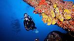 Divers and Sponges on the Eagle, Islamorada, Florida