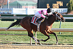 Tour Guide and Brian Hernandez Jr win the 7th race at Churchill Downs.  November 24, 2012.