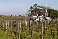 A view over the winter pruned vineyard and the Pisano house with a wind water pump Bodega Pisano Winery, Progreso, Uruguay, South America