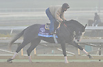 Under Review, trained by John Sadler,exercises in preparation for the upcoming Breeders Cup at Santa Anita Park on October 31, 2012.