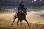 DUBAI,UNITED ARAB EMIRATES-MARCH 24: Adirato,trained by Naosuke Sugai,exercises in preparation for the UAE Derby at Meydan Racecourse on March 24,2017 in Dubai,United Arab Emirates (Photo by Kaz Ishida/Eclipse Sportswire/Getty Images)
