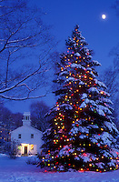 AJ5905, Christmas tree, moon, outdoor, decoration, holiday, tree, snow, winter, Vermont, A large snow covered Christmas tree is sprinkled with tiny colorful lights outside the library in Jericho Center under the full moon at night in Chittenden County in the state of Vermont.