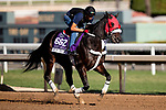 OCT 29: Breeders' Cup Dirt Mile entrant Spun to Run, trained by Juan Carlos Guerrero, at Santa Anita Park in Arcadia, California on Oct 29, 2019. Evers/Eclipse Sportswire/Breeders' Cup