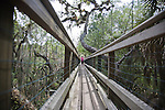 Tourists cross the canopy walkway leading to the canopy tower at Myakka River State Park in Florida.