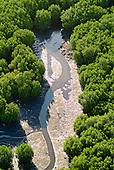 Mangrove de Ouémo