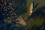 Hundreds of ducks encircle a farmer's boat, creating beautiful patterns.<br /> <br /> The duck farmer is surrounded by more than 300 of the birds as they wait to be fed in Kaliganj, Bangladesh.  SEE OUR COPY FOR DETAILS.<br /> <br /> Please byline: Sujon Adhikary/Solent News<br /> <br /> © Sujon Adhikary/Solent News & Photo Agency<br /> UK +44 (0) 2380 458800