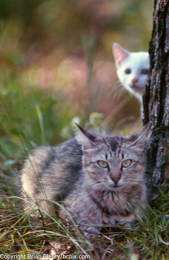 A mother feral cat and her white kitten, Daytona Beach, FL. (Photo by Brian Cleary/www.bcpix.com)