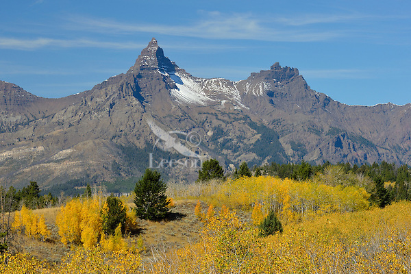 Pilot (left) and Index Peaks in northern Wyoming's Absaroka Mountain Range.  Fall.  View from Beartooth Highway (U.S. Route 212).  Aspen trees providing most fall color.