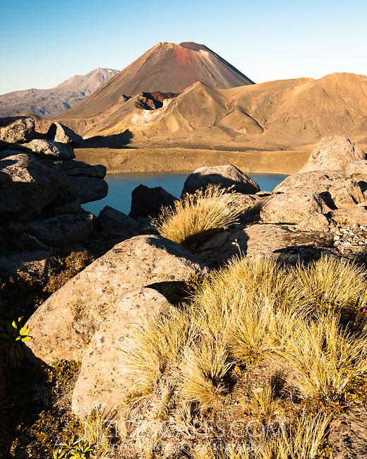 Morning light on volcanic rocks with alpine vegetation and Mount Ngaruhoe, Tongariro National Park, Central Plateau, North Island, UNESCO World Heritage Area, New Zealand, NZ