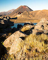 Morning light on volcanic rocks with alpine vegetation and Mount Ngaruhoe, Tongariro National Park, Central Plateau, North Island, UNESCO World Heritage Area, New Zealand, NZ