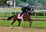 April 26, 2015 Kentucky Derby and Oaks workouts, Churchill Downs. Lovely Maria, owner Brereton C. Jones, trainer Larry Jones. By Majesticperfection x Thunder Cup (Thunder Gulch)  ©Mary M. Meek/ESW/CSM