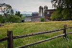 Buttercups carpet the field at a farm in Sugar Hill, NH, USA