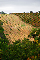 A newly planted vineyard. Domaine Viret, Saint Maurice sur Eygues, Drôme Drome France, Europe