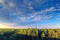 Pine Barren Forest, Brendan T. Bryne State Forest, New Jersey