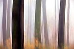 Europa, DEU, Deutschland, Nordrhein Westfalen, NRW, Rheinland, Niederrhein, Krefeld, Wald, Buchenwald, Herbst, Nebel, Kategorien und Themen, Natur, Umwelt, Landschaft, Jahreszeiten, Stimmungen, Landschaftsfotografie, Landschaften, Landschaftsphoto, Landschaftsphotographie, Wetter, Wetterelemente, Wetterlage, Wetterkunde, Witterung, Witterungsbedingungen, Wettererscheinungen, Meteorologie, Wettervorhersage....[Fuer die Nutzung gelten die jeweils gueltigen Allgemeinen Liefer-und Geschaeftsbedingungen. Nutzung nur gegen Verwendungsmeldung und Nachweis. Download der AGB unter http://www.image-box.com oder werden auf Anfrage zugesendet. Freigabe ist vorher erforderlich. Jede Nutzung des Fotos ist honorarpflichtig gemaess derzeit gueltiger MFM Liste - Kontakt, Uwe Schmid-Fotografie, Duisburg, Tel. (+49).2065.677997, ..archiv@image-box.com, www.image-box.com]