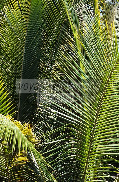 """Océanie/Australie/Queensland/Port Douglas: Palmiers de la forêt tropicale à """"Rainforest Habitat Wildlife Sanctuary"""""""