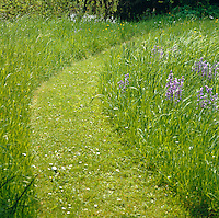 A curved path has been created in the grass which is scattered with bluebells and buttercups