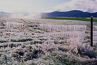 A Wire Fence covered with Icicles, Thompson Okanagan Region, British Columbia, Canada