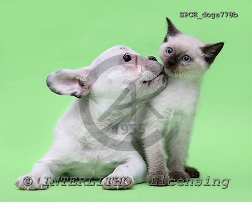 Xavier, ANIMALS, dogs, photos, SPCHdogs778b,#A# Hunde, perros