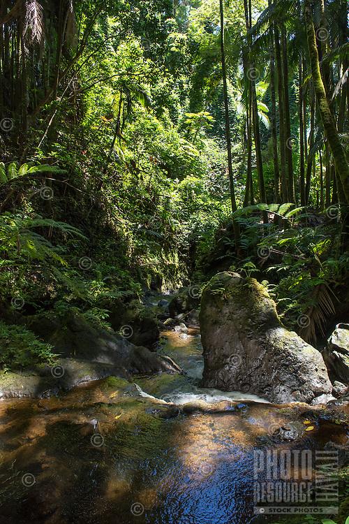A dappled stream and rocks at the Hawaii Tropical Botanical Garden, Papa'ikou, Big Island of Hawai'i.