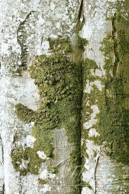 Canada, British Columbia, Victoria, Hatley Park, Beach Trunk Detail